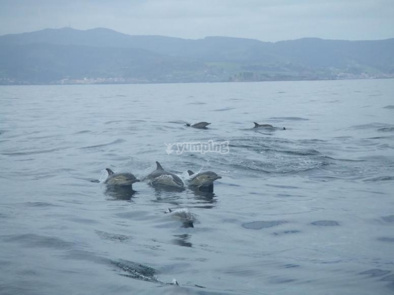 Delfines en Suances
