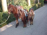 小马骑在巴塞罗那为孩子们