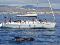 Valentine's Day: whale watching in Adeje