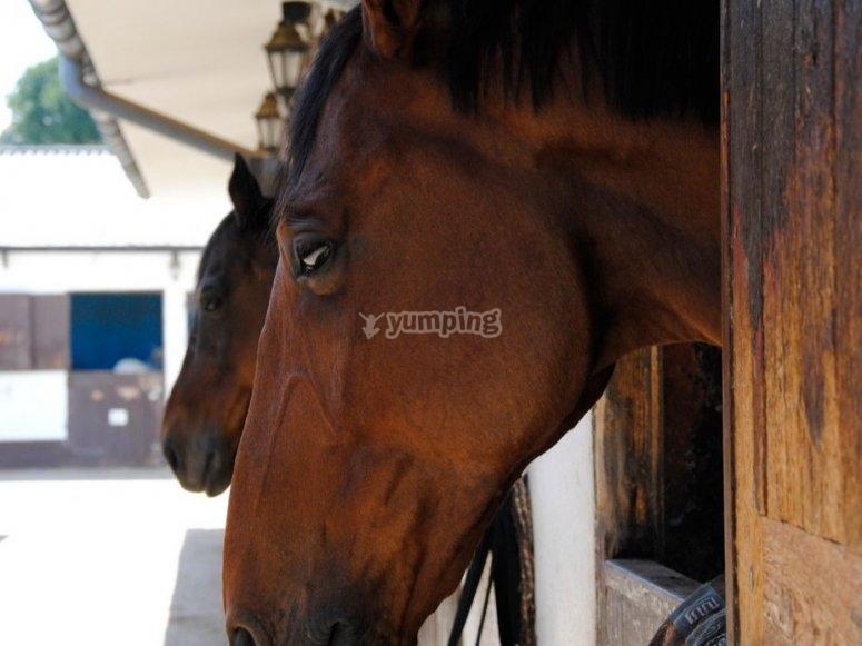 Uno de los caballos