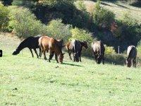 Nuestra familia de caballos