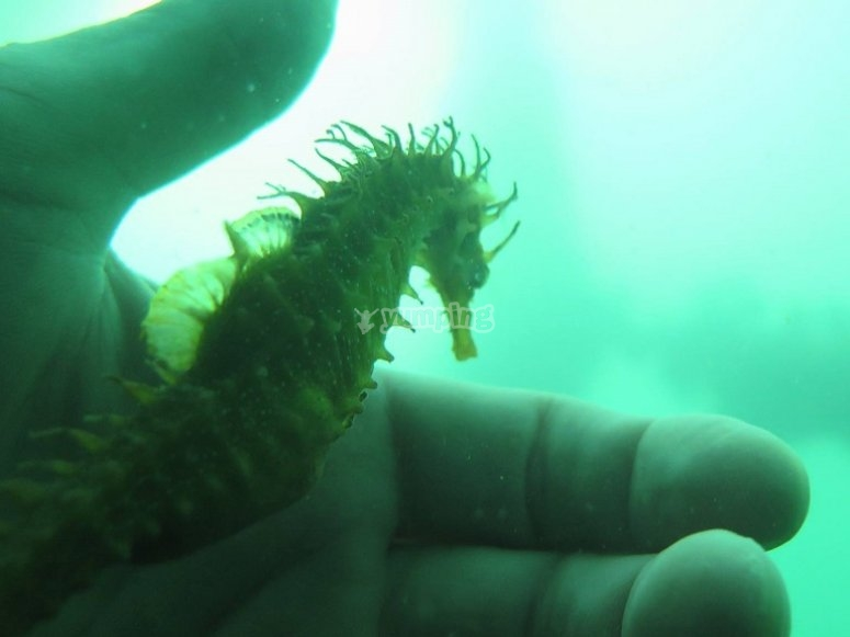 Approaching the seahorse