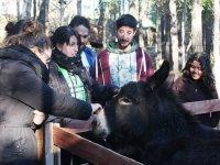 Interactuando con el burro