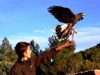 鸟栖息在它的手臂上--999-步行穿过动物园