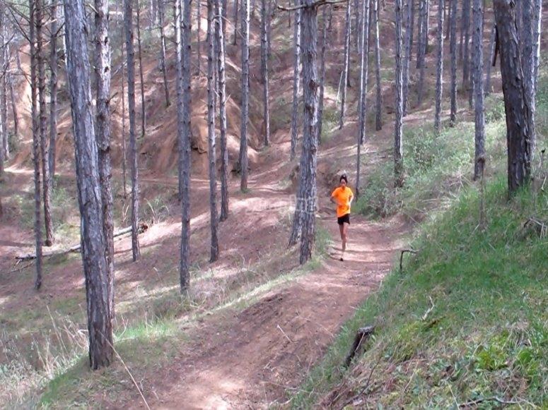 Corriendo en el bosque