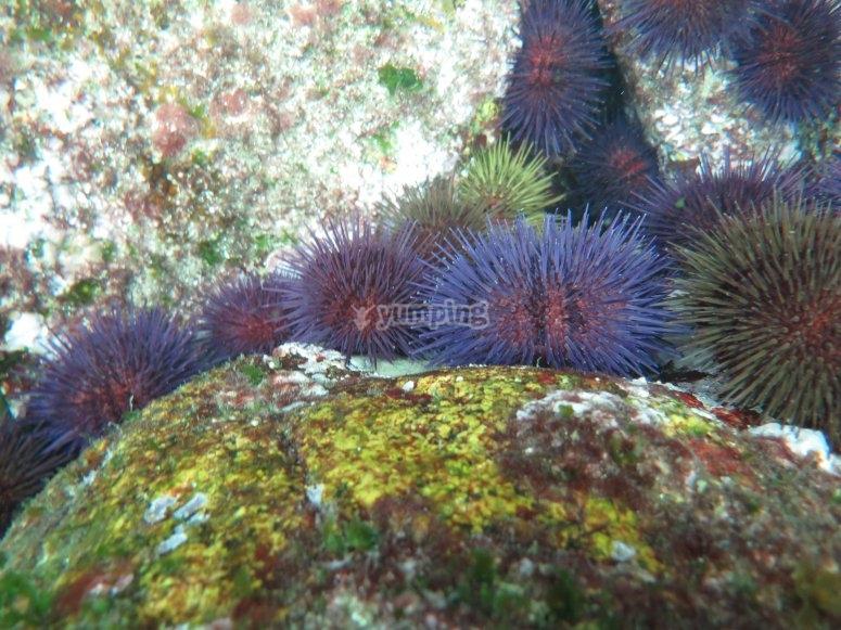 海洋动物群在背景中