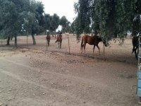 单身派对骑马
