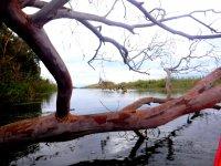 En canoa por el delta del Ebro