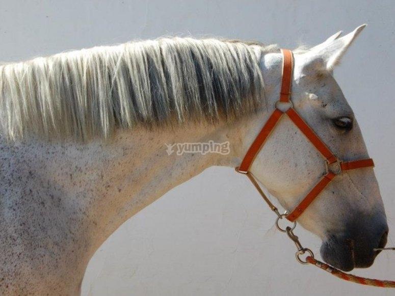 我们的马鞍之一