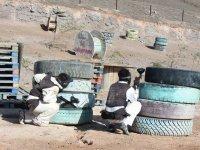 Paintball Lanzarote y paseo en camello cumpleaños
