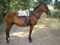 为路线准备的马