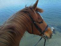 Ruta a caballo Sierra Norte de Madrid