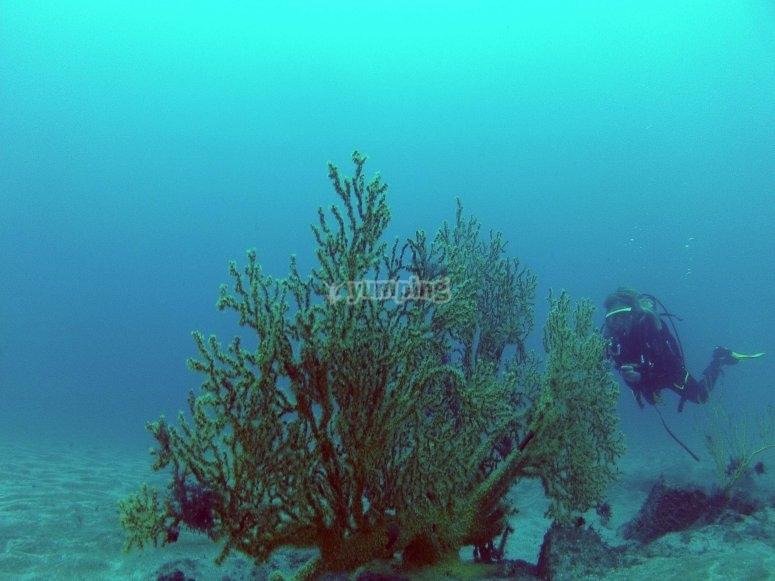 Inmersión en Playa El Cabrón