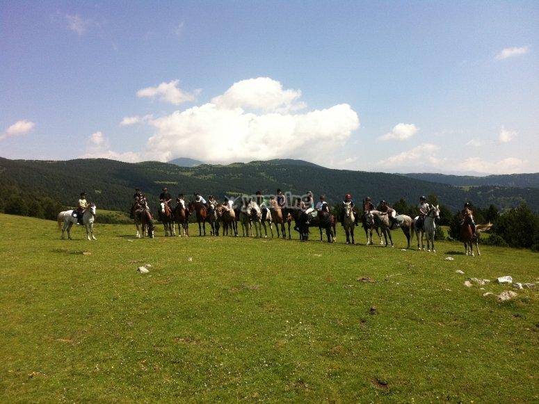 Cavalli sul prato verde