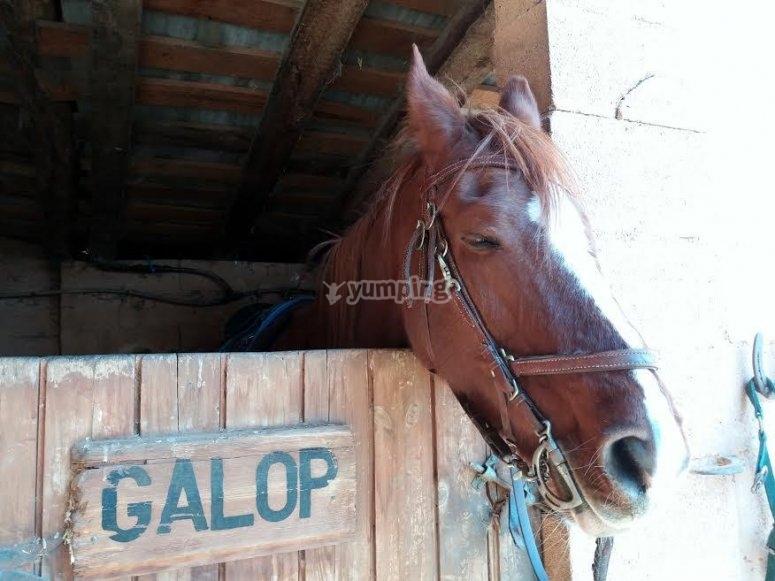 Il nostro cavallo Galop