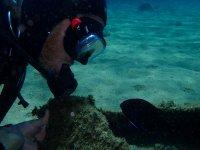 膝盖展望鱼抵御深潜