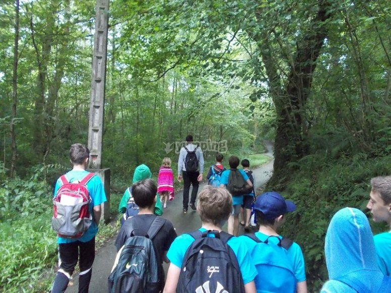 Excursion through the forest