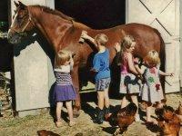 学习骑马爱心饲养