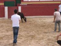 动物看着我们提请注意牛