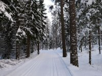 Snowy path between fir trees