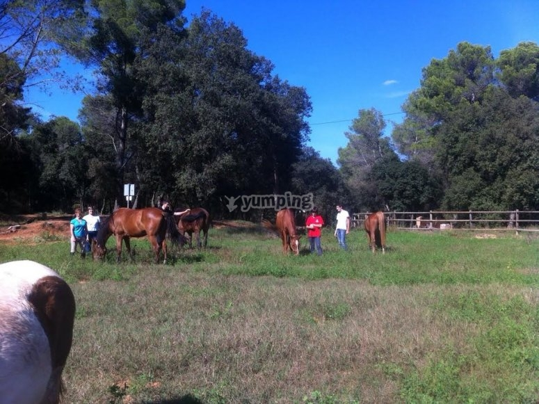 我们在草地上的马匹