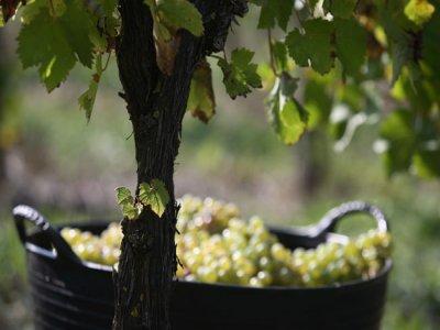 Percorso guidato attraverso Orduña, salto di Nervión e turismo del vino
