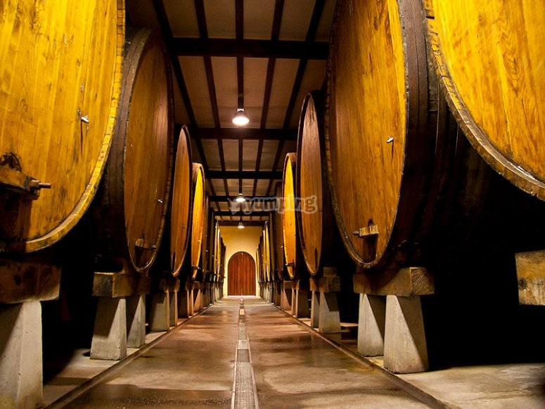 Sagardotegi (Basque cider cellar)