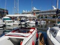 Solar catamaran in port