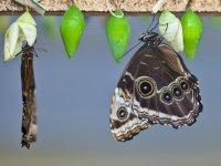 Fattoria delle farfalle