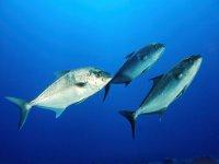 foto peces