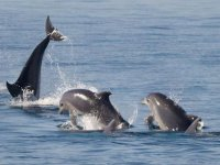 banca dei delfini