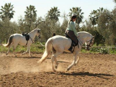 Montar a caballo en el Preparque de Doñana 1 hora