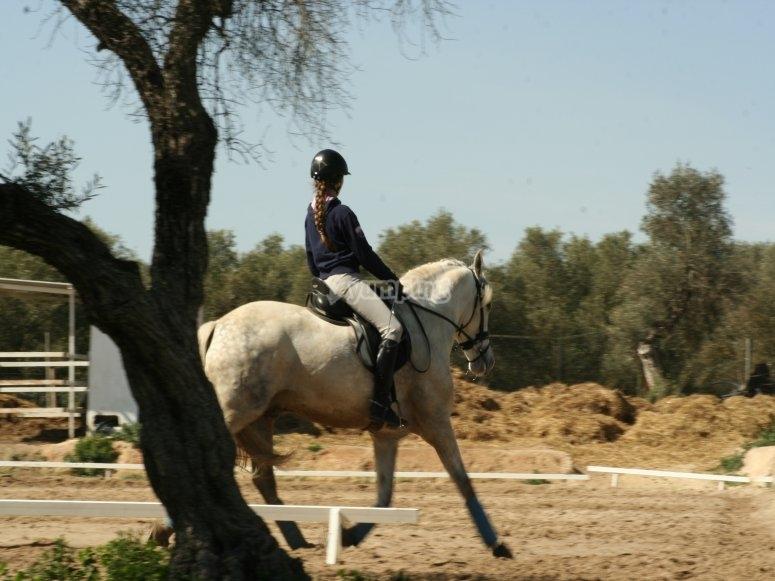 Camminando con il cavallo