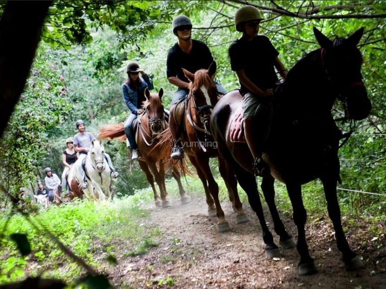 在绿树中与马匹一起