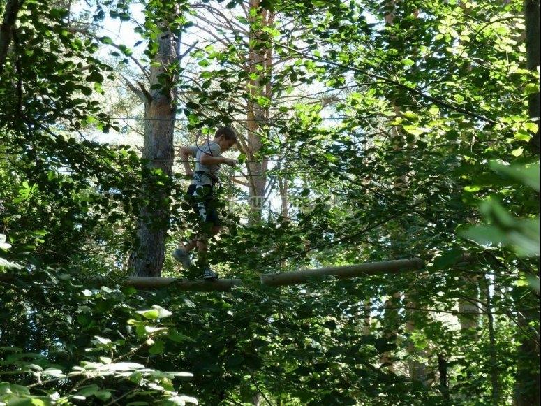 Cruzando troncos entre ramas