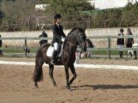 caballonegro