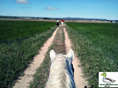 Horse riding in Ciudad Real