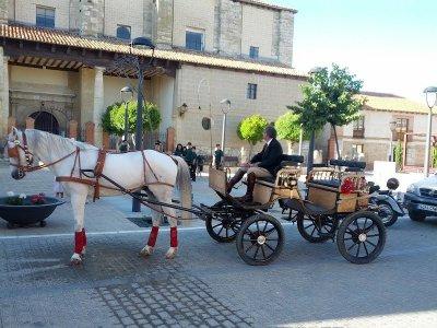 Paseo en coche de caballos por Palencia 45 minutos