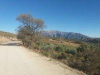 景观从汽车继路径