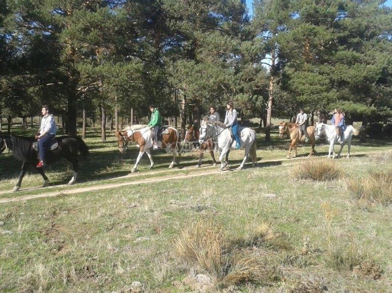 Horse riding camp