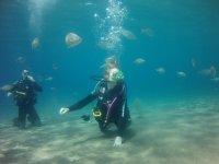 try dive entre peces