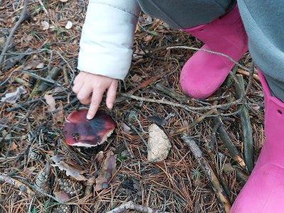 Ruta micológica familiar Sierra Guadarrama niños