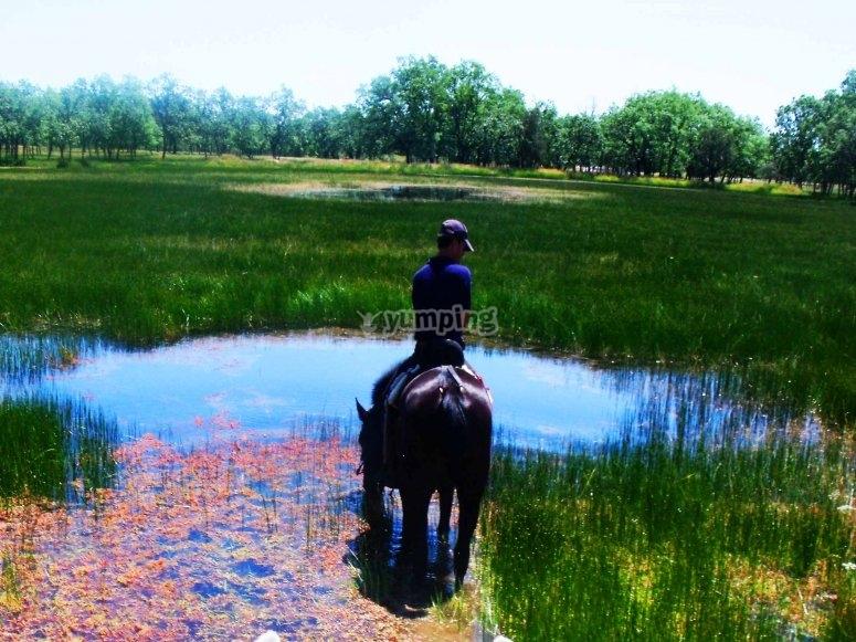 EL caballo se refresca