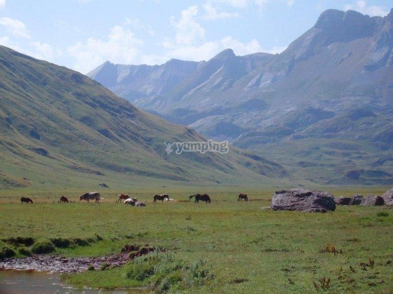 Formidable entorno natural en Huesca