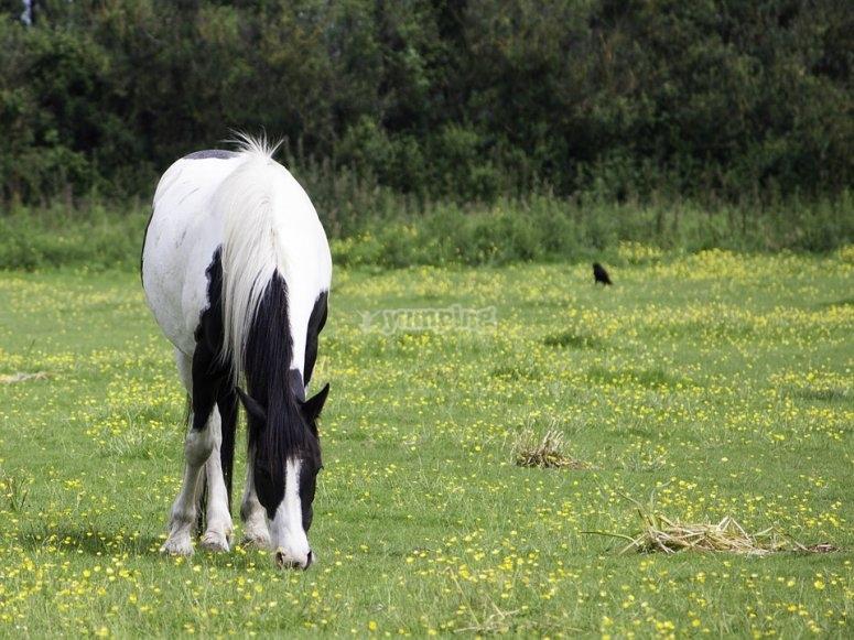 Bellos ejemplares de caballos
