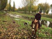 De ruta con el caballo y el perro