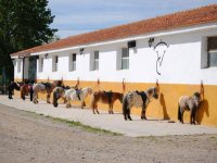 Ponys de Guadalix