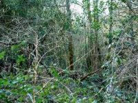 Frondosos bosques cantabros