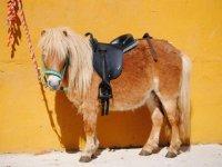 Pony de nombre Guapi