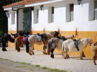 Ponys de la hipica